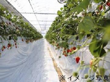 広川町×施設園芸・果樹/個人【1539】-1