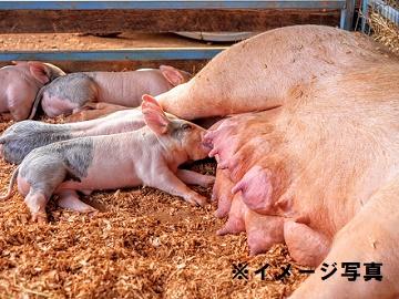 愛知県×養豚/法人【1522】