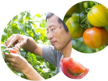 株式会社新門トマト農園-4