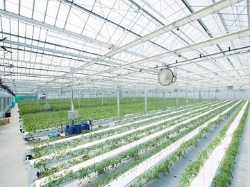 株式会社新門(しんかど)トマト農園-2