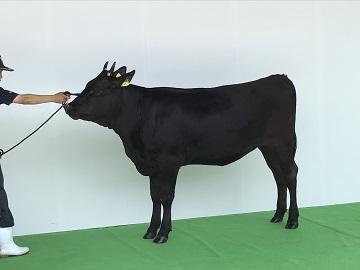 鹿屋市×肉牛/個人【3439】-5
