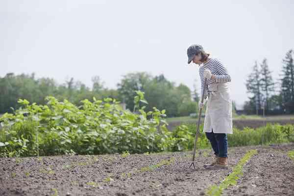 簡単 無 作り方 農薬 農薬