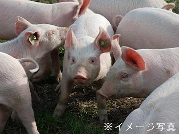 全国×農業資材/法人【1360】-2
