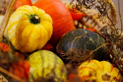 pumpkin_autumn_harvest_208979