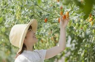 旬の野菜を収穫したい!季節別に見る野菜の種類まとめ
