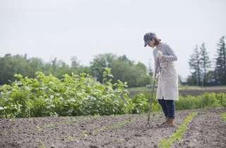 自分でも栽培できる?正しい無農薬野菜の作り方とは?