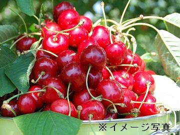 長井市×青果流通/法人【1266】-1