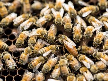 株式会社蜂の郷にしおか-3
