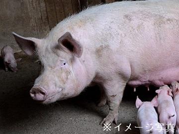 宇佐市×養豚/個人【1088】-1