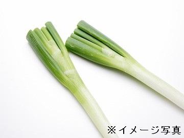 新庄市×露地野菜/個人【1074】-1