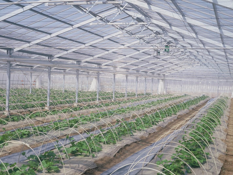 ハウスのイシイ農材株式会社-3