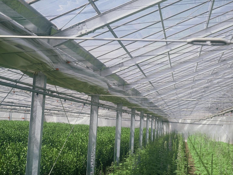 ハウスのイシイ農材株式会社-4