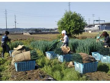 ふるさと農園1