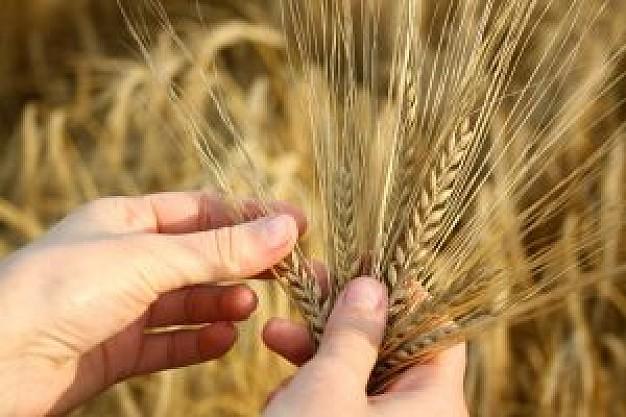 雑穀食文化