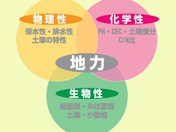 大崎町×野菜・加工/法人【0984】-1