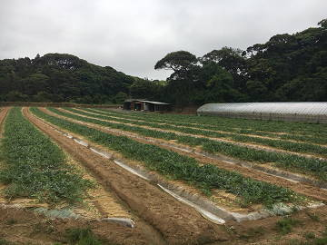 楢崎農園-8