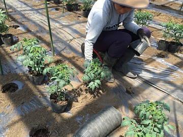 山本農園-1