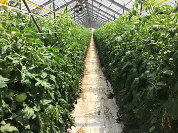 山本農園-2