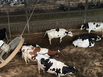 農事組合法人下金田酪農組合-2