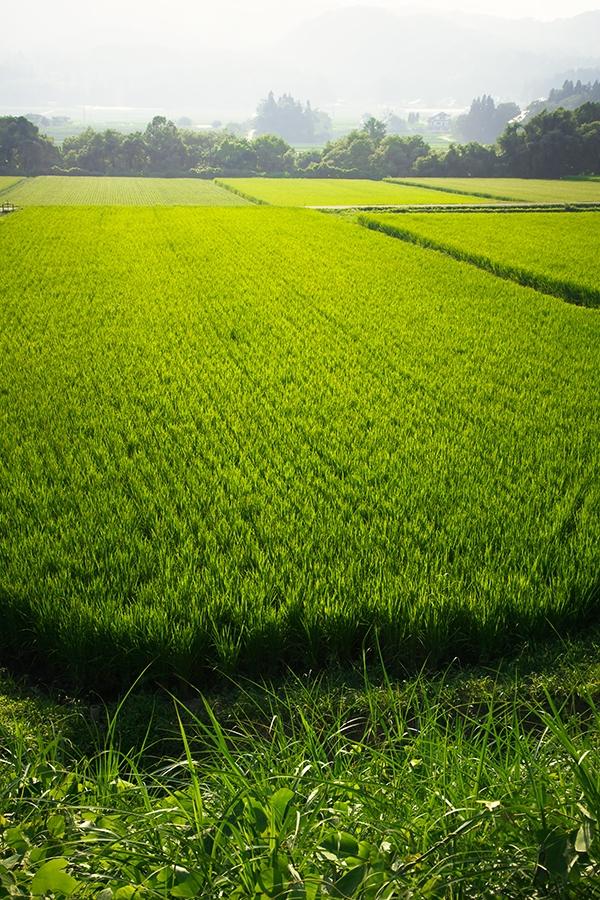 進化する農業 第六次産業化