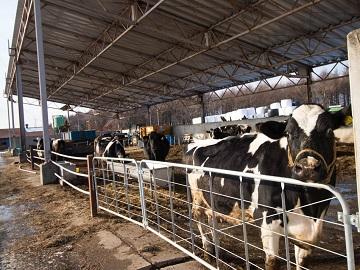 株式会社牛や-3
