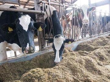 株式会社牛や-6
