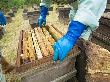 有限会社美甘養蜂園-2