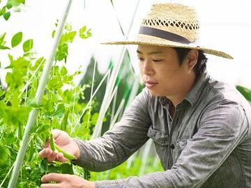 能登地区農業インターンシップ-3