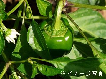 鉾田市×野菜/個人【0891】-1