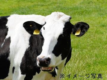 鹿追町×酪農/法人【1587】-2