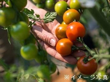 【東庄町×野菜/個人【0806】