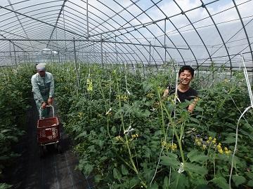 広島県世羅町農業研修生募集【研修生】-5