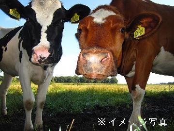 昭和村×酪農/法人【0713】-2
