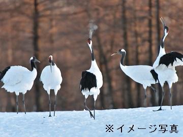 鶴居村×酪農/法人【0712】-1