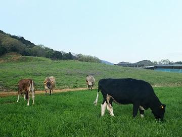 農事組合法人大一牧場-2