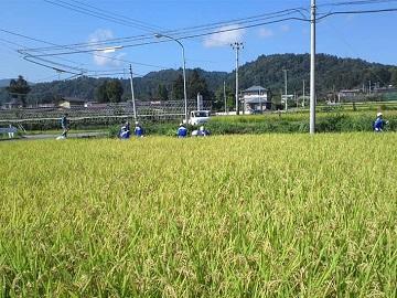 山辺町×養豚/法人【0658】-1