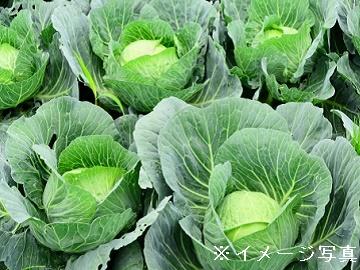 上里町・御代田町×野菜/法人【0647】-1