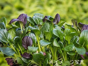 上里町・御代田町×野菜/法人【0647】-2