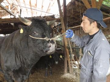 名張市×肉牛/法人【0634】-2