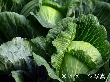 名古屋市×種苗/法人【0630】-2