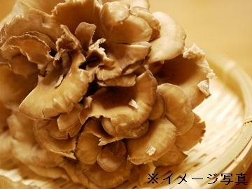 高崎市×野菜/法人【0596】-2