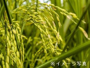 海津市×稲作/法人【0595】-1