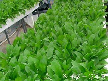 北杜市×植物工場/法人【0593】-1