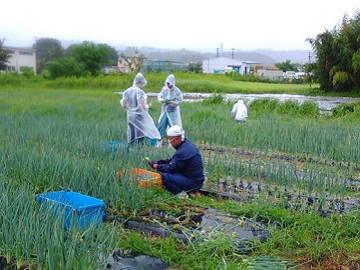 長野県・静岡県×野菜/法人【0760】-1