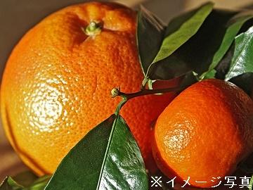 えひめ中央農業協同組合(伊予市)-1