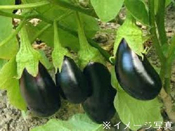 えひめ中央農業協同組合(伊予市)-3