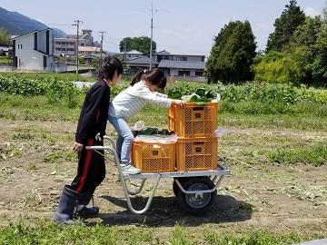 株式会社いけちゃん農園-2
