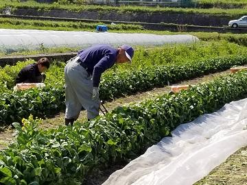 株式会社いけちゃん農園-3