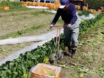 新居浜市×野菜/法人【0566】-1