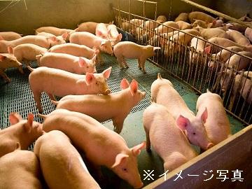 北上市×養豚/法人【0541】-1